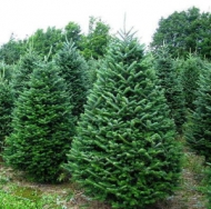 Make your Christmas decoration easy this year with Tradition Trees! ($50 to spend for just $25!)