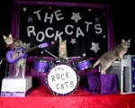 $12.50 tickets to 'The Amazing Acro-Cats' at Morris and Rae Frank Theater (reg. $25)